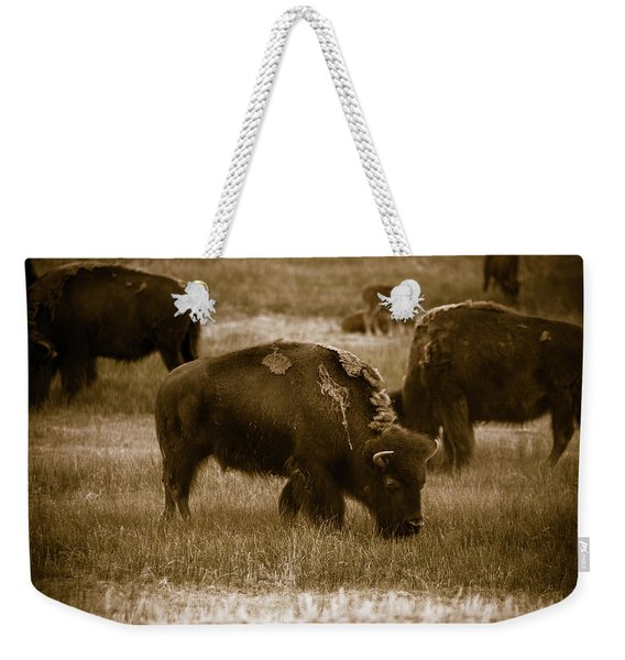 American Bison Grazing - Bw Weekender Tote Bag