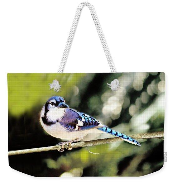 American Blue Jay On Alert Weekender Tote Bag