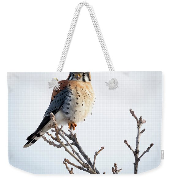 American Kestrel At Bender Weekender Tote Bag