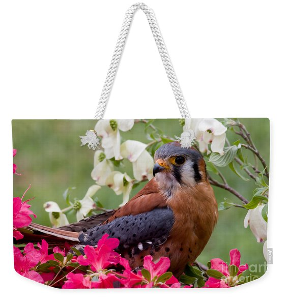 American Kestrel In The Springtime Weekender Tote Bag