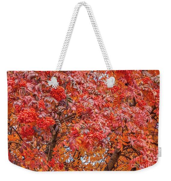 American Mountain Ash In Autumn Weekender Tote Bag