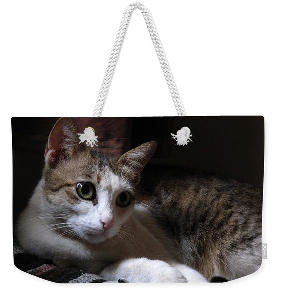 Ammani The Cat Weekender Tote Bag