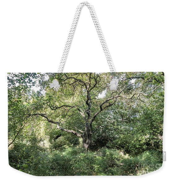 Weekender Tote Bag featuring the photograph An Old One In The Forest by Arik Baltinester