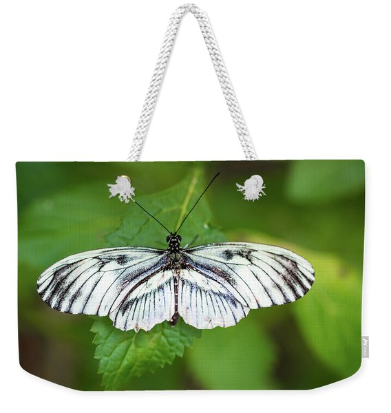 Weekender Tote Bag featuring the photograph Angry Butterfly With A Mustache by Robin Zygelman