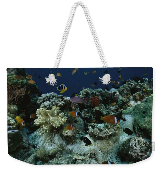 Anthias Fish, Anemonefish And Basslets Weekender Tote Bag