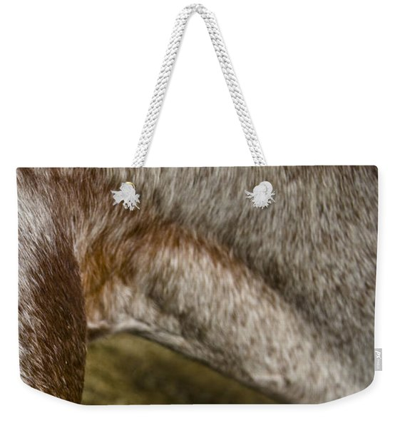 Weekender Tote Bag featuring the photograph Appaloosa 2 by Catherine Sobredo