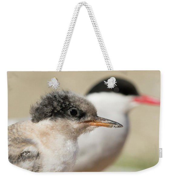 Arctic Tern Chick With Parent - Scotland Weekender Tote Bag