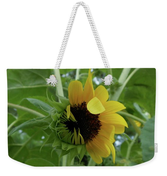 Weekender Tote Bag featuring the photograph Sunflower Rising by Kristin Aquariann