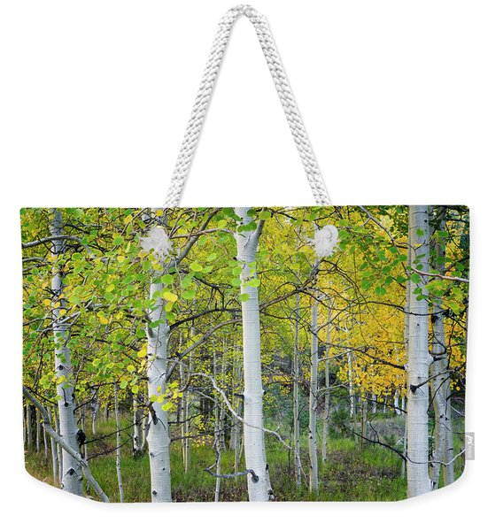 Aspens In Autumn 6 - Santa Fe National Forest New Mexico Weekender Tote Bag