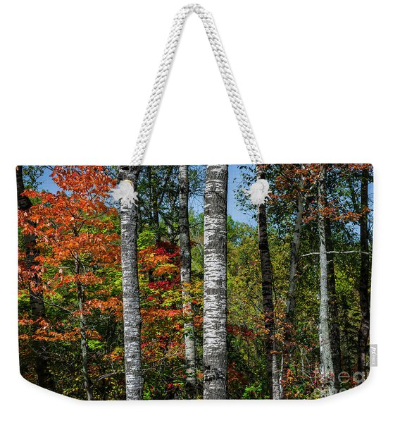 Aspens In Fall Forest Weekender Tote Bag