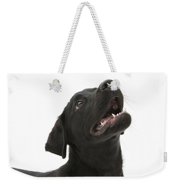 Attentive Black Lab Pup Weekender Tote Bag