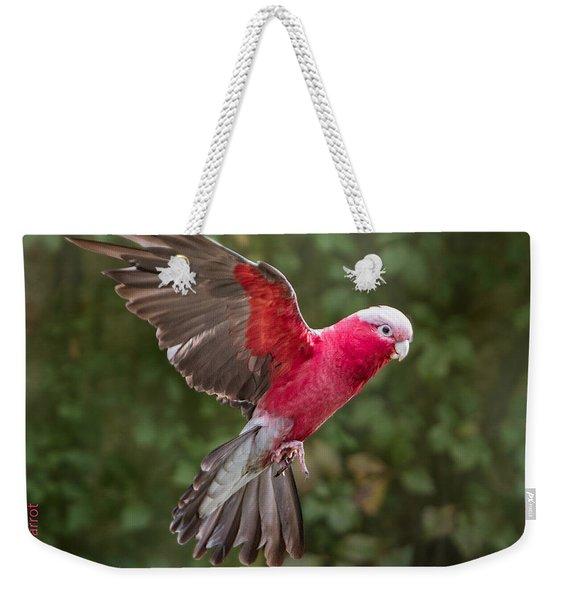 Australian Galah Parrot In Flight Weekender Tote Bag