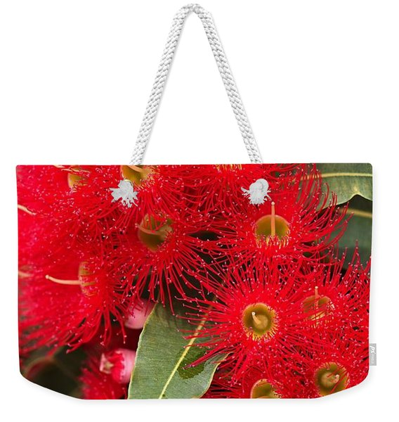 Australian Red Eucalyptus Flowers Weekender Tote Bag