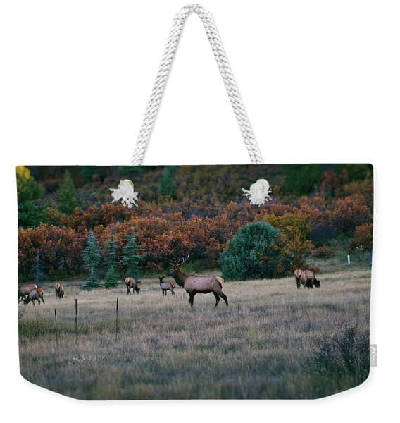 Weekender Tote Bag featuring the photograph Autumn Bull Elk by Jason Coward