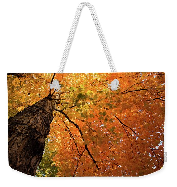 Autumn Canopy In Maine Weekender Tote Bag