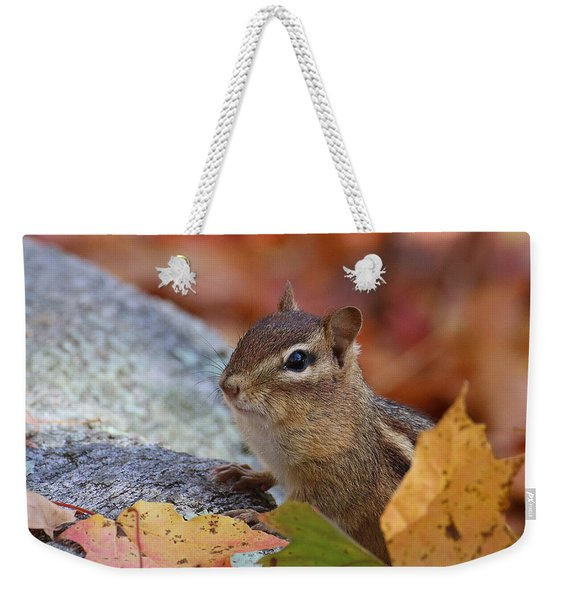 Weekender Tote Bag featuring the photograph Autumn Chipmunk by William Selander