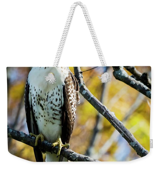 Autumn Red-tailed Hawk Weekender Tote Bag