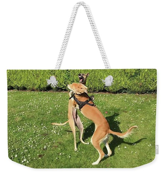 Ava The Saluki And Finly The Lurcher Weekender Tote Bag