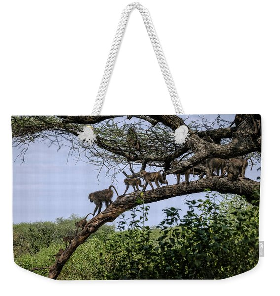 Weekender Tote Bag featuring the photograph Baboons On A Limb by Mary Lee Dereske