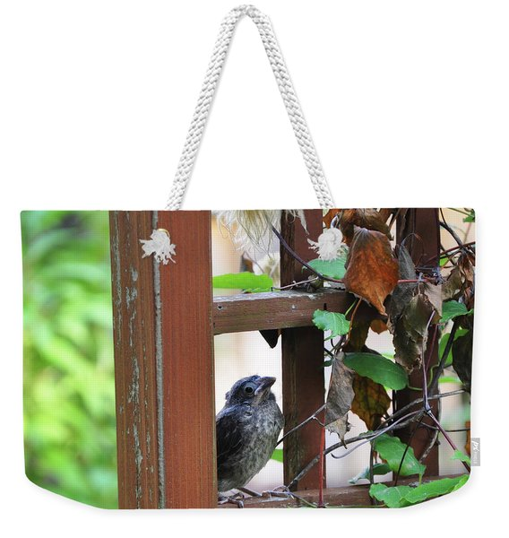 Baby Bird Sitting Weekender Tote Bag