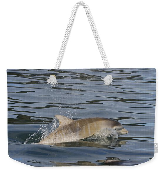Baby Bottlenose Dolphin - Scotland  #35 Weekender Tote Bag