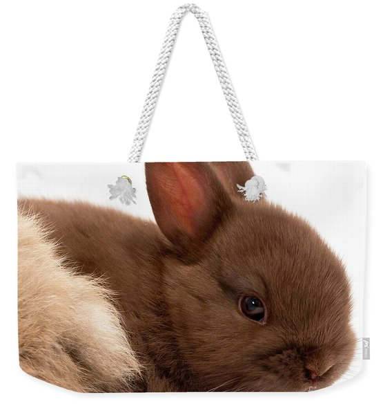 Weekender Tote Bag featuring the photograph Baby Bunny  #03074 by John Bald