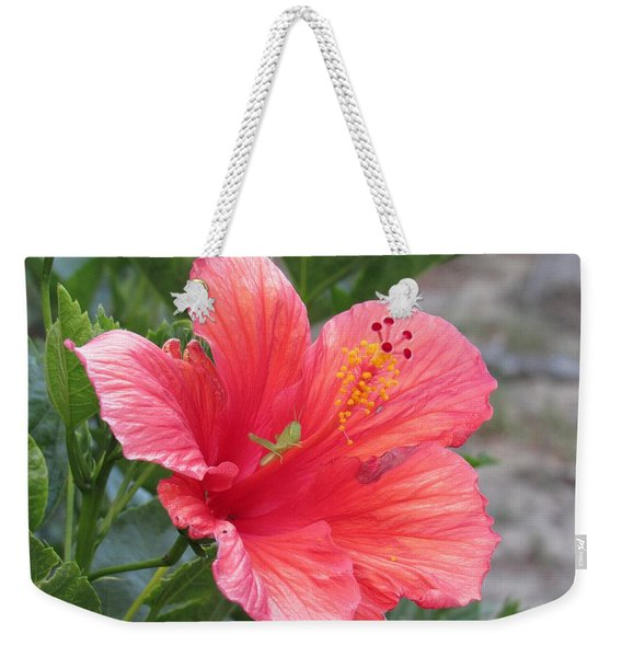 Weekender Tote Bag featuring the photograph Baby Grasshopper On Hibiscus Flower by Nancy Nale