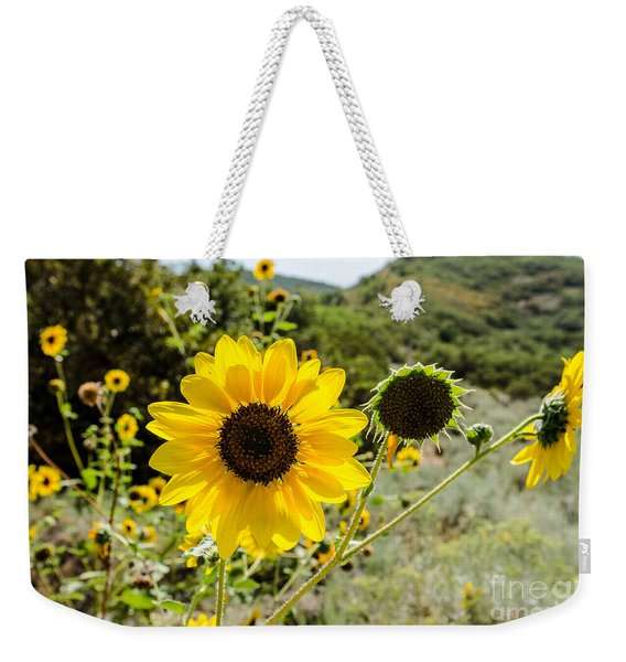 Backlit Sunflower Aka Helianthus Weekender Tote Bag