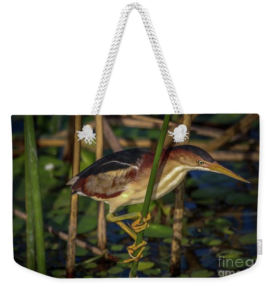 Weekender Tote Bag featuring the photograph Balanced Perch Bittern by Tom Claud