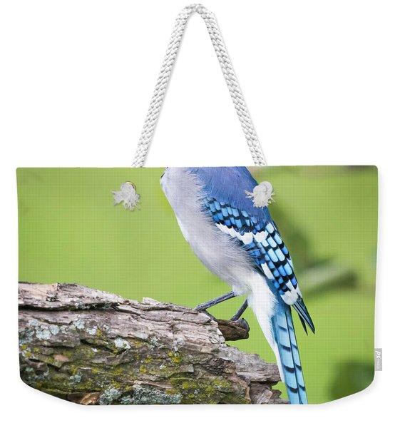 Bald Blue Jay- It Must Be August Weekender Tote Bag