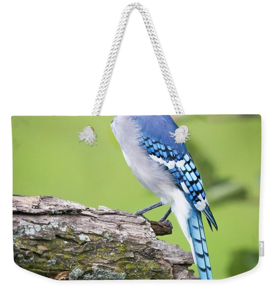 Bald Blue Jay- It Must Be August Weekender Tote Bag
