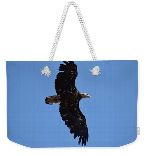 Weekender Tote Bag featuring the photograph Bald Eagle Juvenile Soaring by Margarethe Binkley