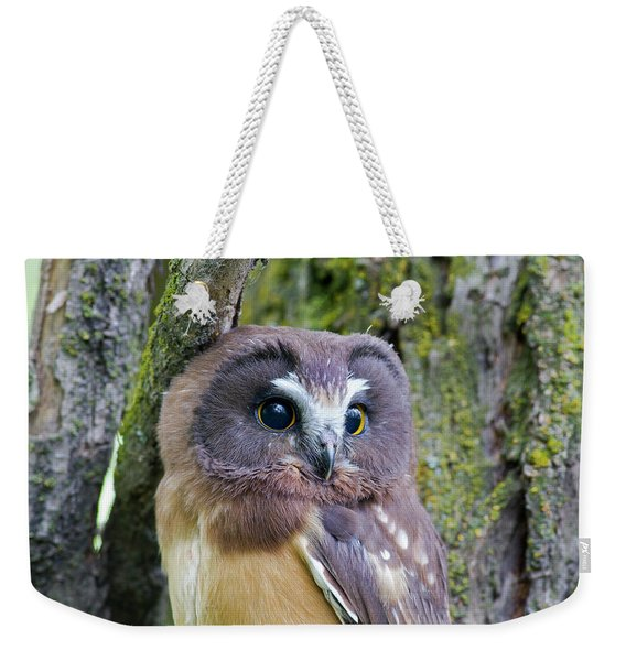 Beautiful Eyes Of A Saw-whet Owl Chick Weekender Tote Bag