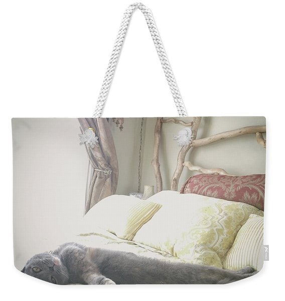 Beautiful Gray Scottish Fold Cat Relaxing On A Bed Weekender Tote Bag