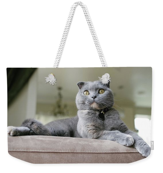 Beautiful Grey Scottish Fold Cat Lounges On Couch Weekender Tote Bag