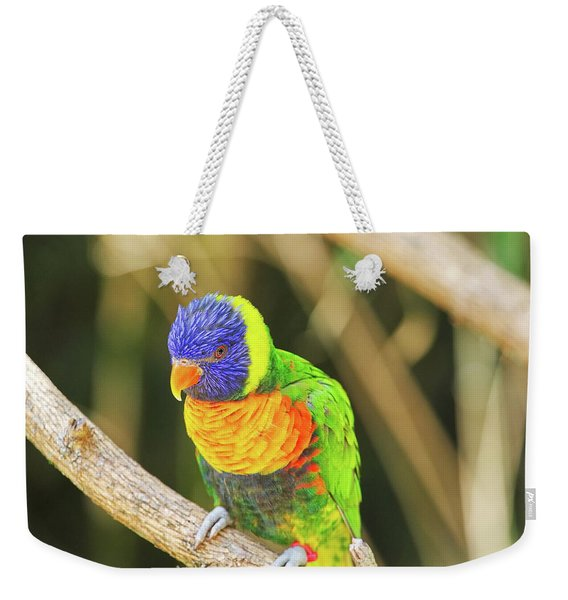 Beautiful Perched Mccaw On A Branch. Weekender Tote Bag