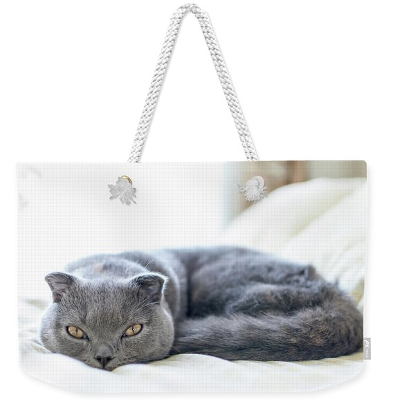 Beautiful Scottish Fold Cat Curled Up On Bed Weekender Tote Bag