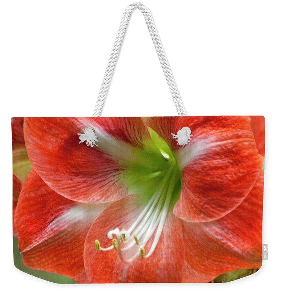 Belladonna Lily Amarillo Weekender Tote Bag
