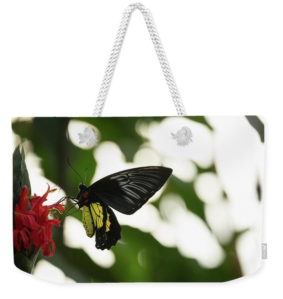 Weekender Tote Bag featuring the photograph Big Butterfly by Brian Hale