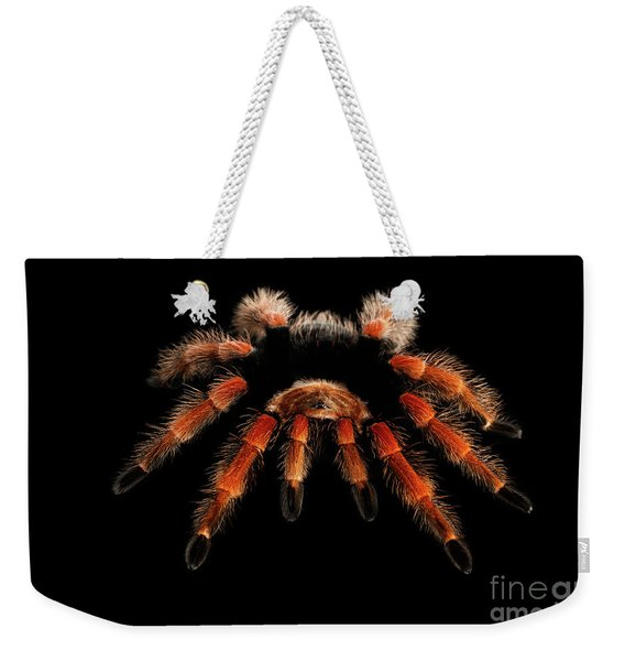 Big Hairy Tarantula Theraphosidae Isolated On Black Background Weekender Tote Bag