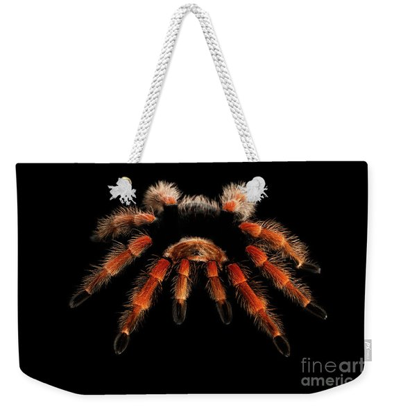 Big Hairy Tarantula Theraphosidae Isolated On Black Background Weekender Tote Bag