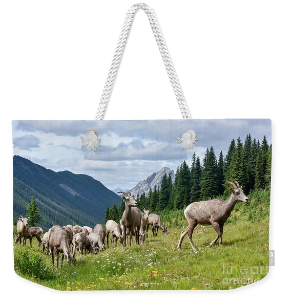 Big Horn Sheep Weekender Tote Bag