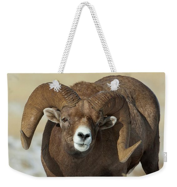 Bighorn Ram In Montana Weekender Tote Bag