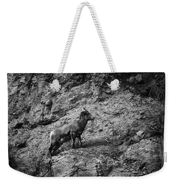 Weekender Tote Bag featuring the photograph Bighorn Sheep Ewe On Wolf Creek Pass by Jason Coward