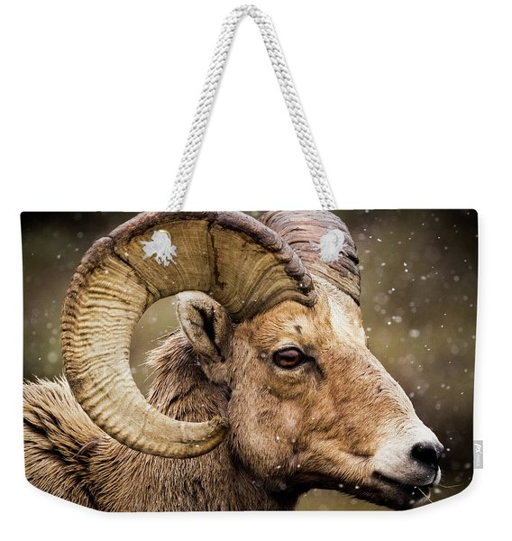 Bighorn Sheep In Winter Weekender Tote Bag