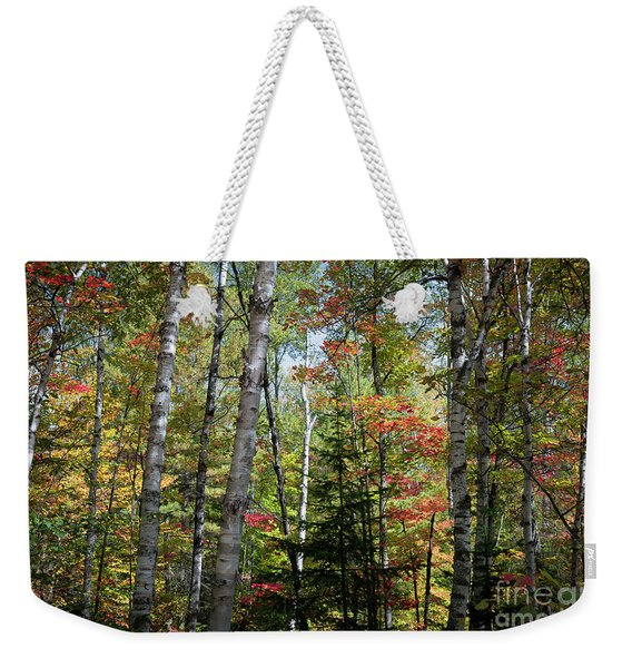 Birches In Fall Forest Weekender Tote Bag