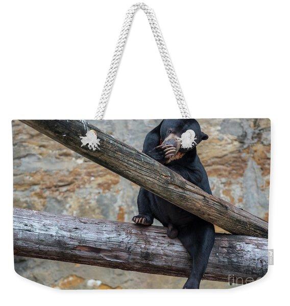 Black Bear Cub Sitting On Tree Trunk Weekender Tote Bag