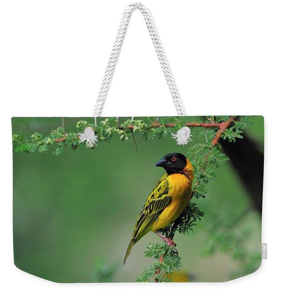 Black-headed Weaver Weekender Tote Bag