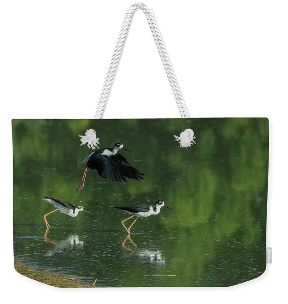 Black-necked Stilts 4301-080917-1cr Weekender Tote Bag