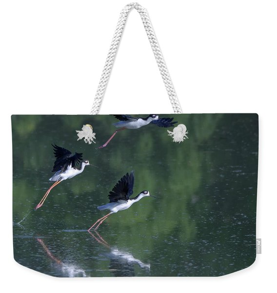 Black-necked Stilts 4302-080917-2cr Weekender Tote Bag